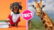 ТЕСТ: Със сигурност обичаш животните, но какво знаеш за тях?