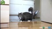 Котешка мамба