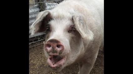 Artery - Balkan Underground - 07 - I Am A Pig
