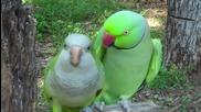 Птиците в хармония (разбирателство и обичта при различните видове папагали + влюбената двойка)