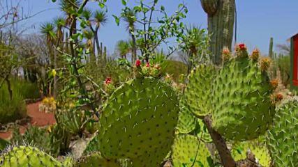 Животът сред кактусите (