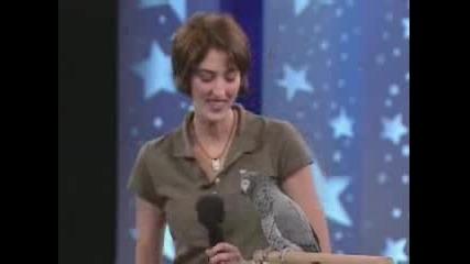 Папагал Имитиращ животни