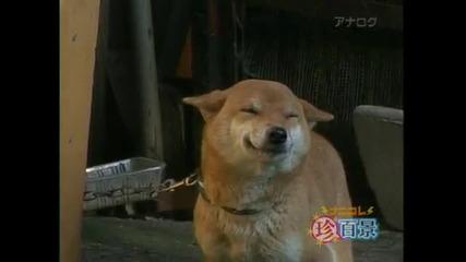 Куче се усмихва много сладко - смях