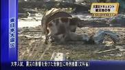 Японско куче не иска да си тръгне без другарчето си !!много е тъжно
