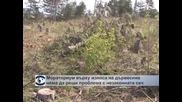 Танева: Мораториум върху износа на дървесина няма да реши проблема с незаконната сеч