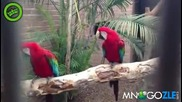 Папагалите дали не чаткат рапа