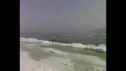 Ледоход Видин 22.02.2012г.