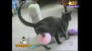 Компилация - Смешни Котки!