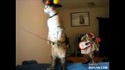 Котката Мускетар