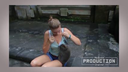 Адски луди маймуни!!! Какви досадни тарикати!