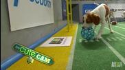 Puppy Bowl with Lil' Bub Puppy Bowl X