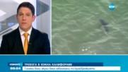 Бели акули в Калифорния предизвикаха тревога