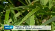 Новините на NOVA NEWS (20.06.2021 - 15:00)