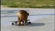 Куче кара скейтборд Невероятно !!!!