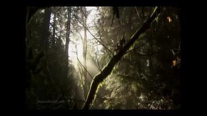 Earth Drum - Dancing for a Vision - David Steve Gordon