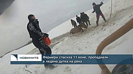 Спасиха 11 коне, пропаднали в ледена дупка на река