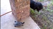 Коте се бъзика с костенурка : Хвани ме, ако можеш !