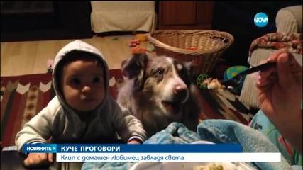 """Куче казва """"мама"""" в очакване на лакомства"""