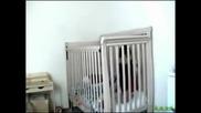 Бебешок бяга от затвора