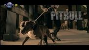 Промо / Eмилия и Тони Стораро - Питбул - Full H D - 2015 + Текст
