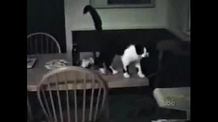 Hai-otkachenite kotki