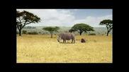 Safari - Kilroy Travels