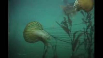 Как да предпазваме океаните