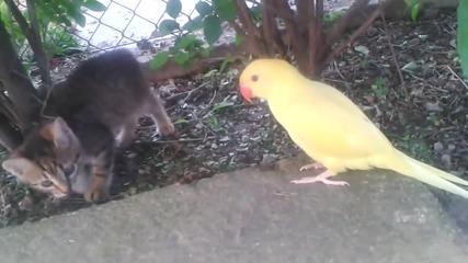 Папагал се опитва да се сприятели с коте