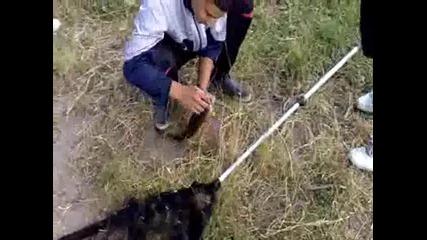 ribolov na amur 2