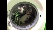 Коте в пералня машина