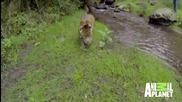 Ягуарът е най-добрият приятел на човека