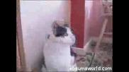 Slipknot - Metal Cat (Sic)