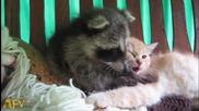 Вижте какво се случва между тези две животинки ...