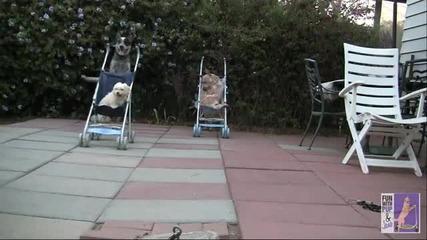 Кучешките Бързи и яростни - много смях