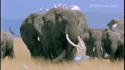 Удивителната Природа - Африка