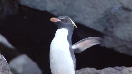Красотата на природата - Пингвини И Делфини