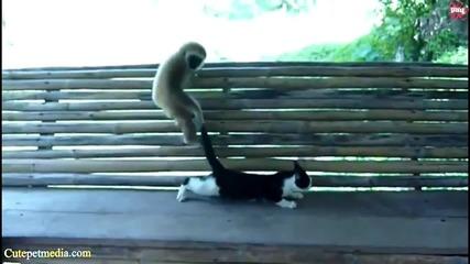 Супер забавни маймунски изпълнения (или поведения).. :)))