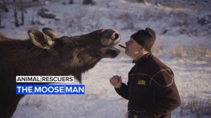 Animal Rescuers: Leffe's Swedish wild moose farm