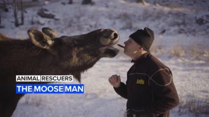 Animal Rescuers: Leffe's Swedish wild moose farm