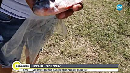 Рибар улови екзотичен хищник в яз.