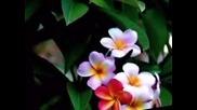 Делиб - Лакме ( Дует на цветята )