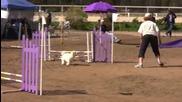 Умни кучета минават през препятствия