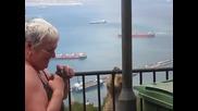 Маймуна краде сладоледа на възрастна дама - Смях