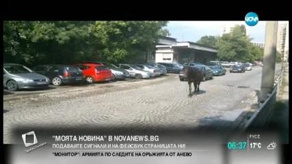 """""""Моята новина"""": Коне по улиците на София"""