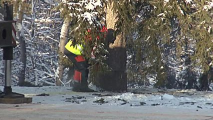 30-metre Christmas tree felled before taken to Kremlin