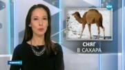 Сняг заваля в Сахара - следобедна емисия