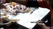 Да подготвим пилетата за пазара - грозната истина