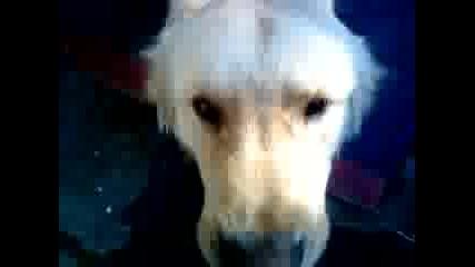 Сладко куче 2