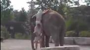 Trimata glupaci sestra im i slona