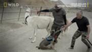Кучетата са нашите аватари | Сизър Милан: Добър стопанин - добро куче | NG Wild Bulgaria